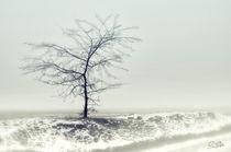 Quiet Mist by Szantai Istvan