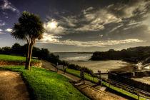 Palm over Towan Beach by Rob Hawkins