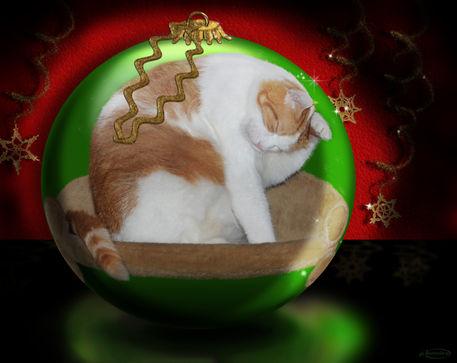 Merry-paw-mas