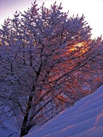 Wintersonne by Julia  Berger