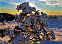 Frozen by Julia  Berger