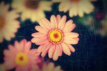 'nur ein paar Blumen' by Kai Hoge