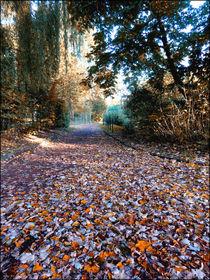 Herbstflucht von Nicole Frischlich