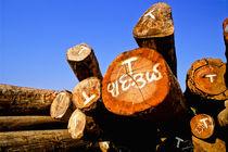 Tropical hardwood in Burma, (Myanmar) von ingojez