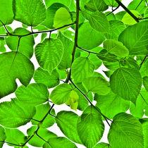 Green leaves by kbhsphoto