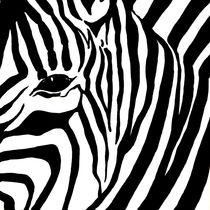 Zebra 1 von 3 von Lidija Kämpf