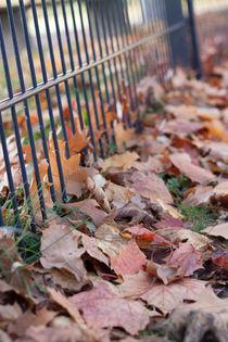 Herbstlaub by Andrea Schunert