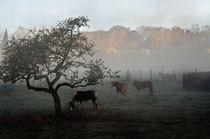 Horses in the fog  by Barbara  Keichel