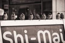 Performing Birds No. 1 by mosfotostudio