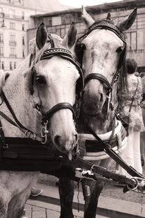 Performing Horses No. 3 by mosfotostudio
