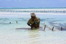 Lady of the Sea - Zanzibar, East Africa by Aidan Moran