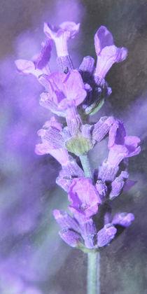 Lavendel von Christine Bässler