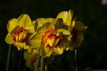 Flowers I by Mirko Freudenberger