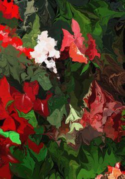 Never-a-rose-garden