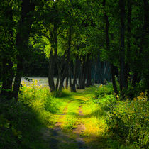 Path lined with trees by kbhsphoto