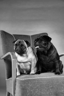 Pug-Dogs, Mops von pitquist
