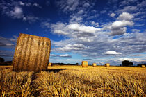After the Harvest by royspics