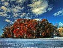 Autumnal Oasis by royspics