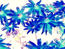 Blue-flowers
