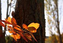 Herbststimmung von Margarita Moerth