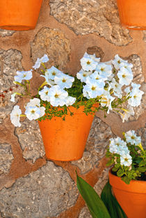 Fs-wall-with-flowers
