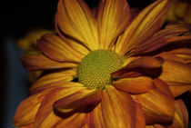 Autumn Mum by Judy Hall-Folde