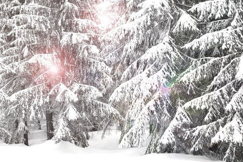 Christmasscape2012