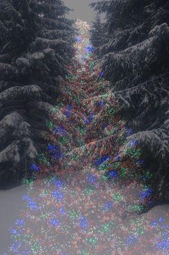 Wonder-tree