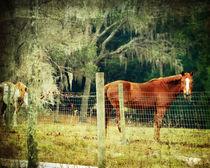 Equine Eden by Judy Hall-Folde