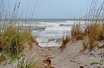 Surf's Up by Judy Hall-Folde
