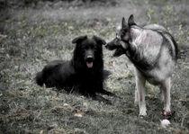 Two dogs von pitquist