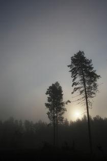 Scandinavian colors von pitquist