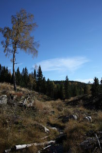 Scandinavian colors by pitquist