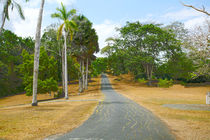 Colorful trees by the road in Panama during autumn time  by David Castillo Dominici