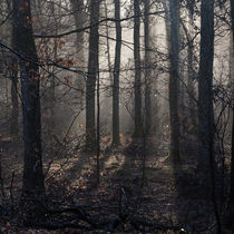 Misty Dean by David Tinsley