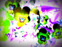 Violets by Pauli Hyvonen