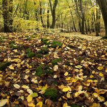 Autumn Carpet von David Tinsley