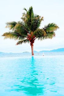 palm and beach  by David Castillo Dominici