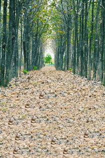 View of fallen dried leaves, a perfect straight path along the edge of a forest and meadow.  Deceased pathway by David Castillo Dominici