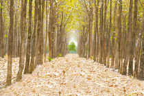 Pathway in the forest full of fallen dried leaves.  Road to a better world than here. by David Castillo Dominici