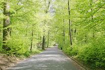 Roads of a beautifull Swiss park by David Castillo Dominici
