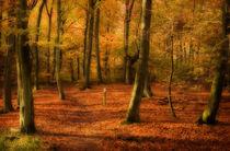 Autumn Woods colour von Paul Davis