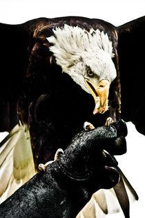 USA! USA! by Stefan Antoni - StefAntoni.nl