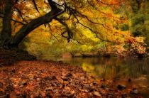 Nidd Gorge in Autumn von Paul Davis