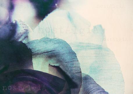 Lilacrose-nostalgia-c-sybillesterk