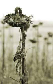 Blumenposter by Jens Berger