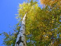 Toward-the-blue-sky