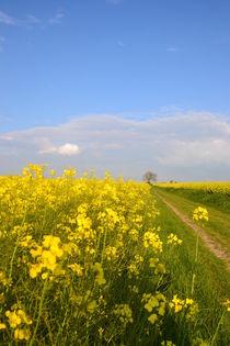 Landwege by Ute Bauduin