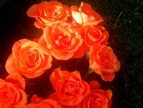 Roses by Pauli Hyvonen