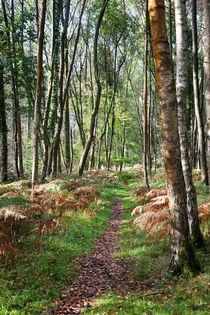 Autumn Birch von David Tinsley